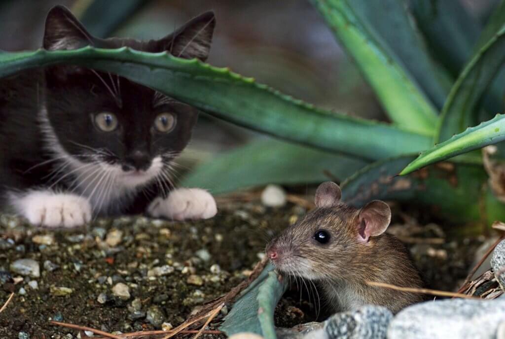獲物を丸呑みするのが本来の猫の食事スタイル!