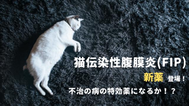 猫伝染性腹膜炎