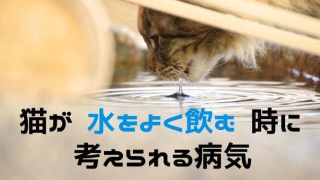 猫が水をよく飲む時に考えられる病気