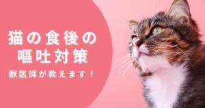 猫の食後すぐの嘔吐が激減した話。獣医師が早食い対策を教えます。
