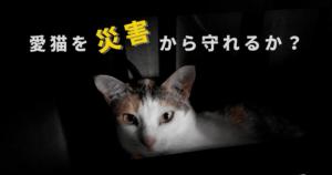 愛猫を災害から守るために何ができるか?防災グッズや同行避難について獣医師が解説