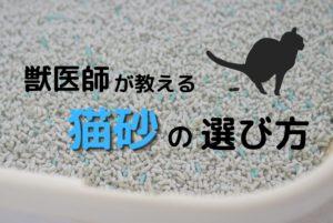 おすすめの猫砂を獣医師が紹介します【論文・エビデンスあり】